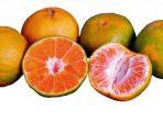 jeruk-keprok